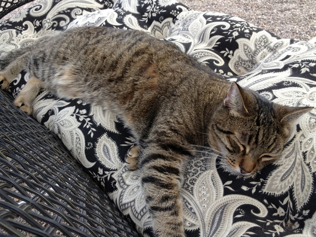 Simon sleeping outside on a warm day
