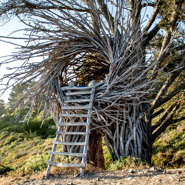 Jayson Fann's nests