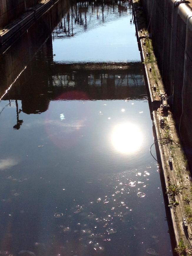 Jellyfish in the Lock