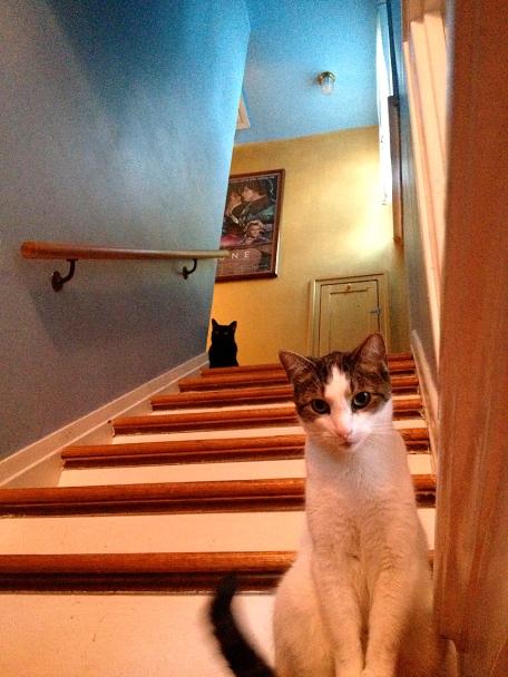 Wyatt and Jasper stairs