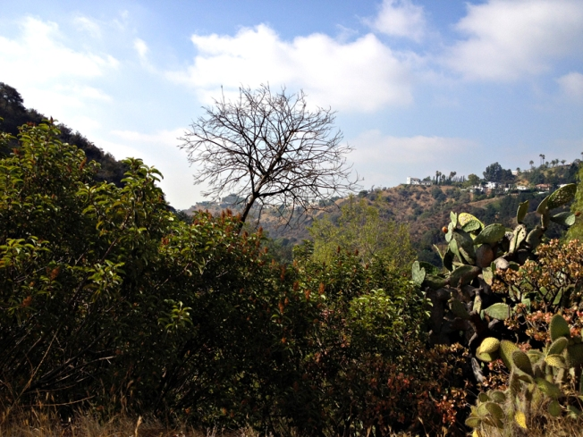 Hollywood Hills Sept 2013