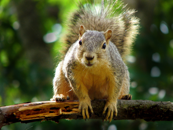 Squirrel by Matt McGee, Creative Commons license