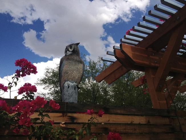 Owl Hawk Raindrops