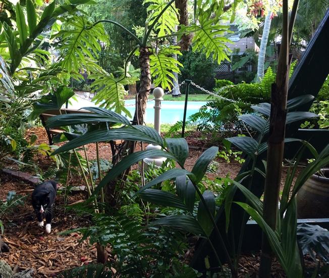 key west hemingway catz pool