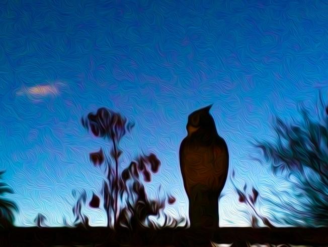 sunrise with plastic owl