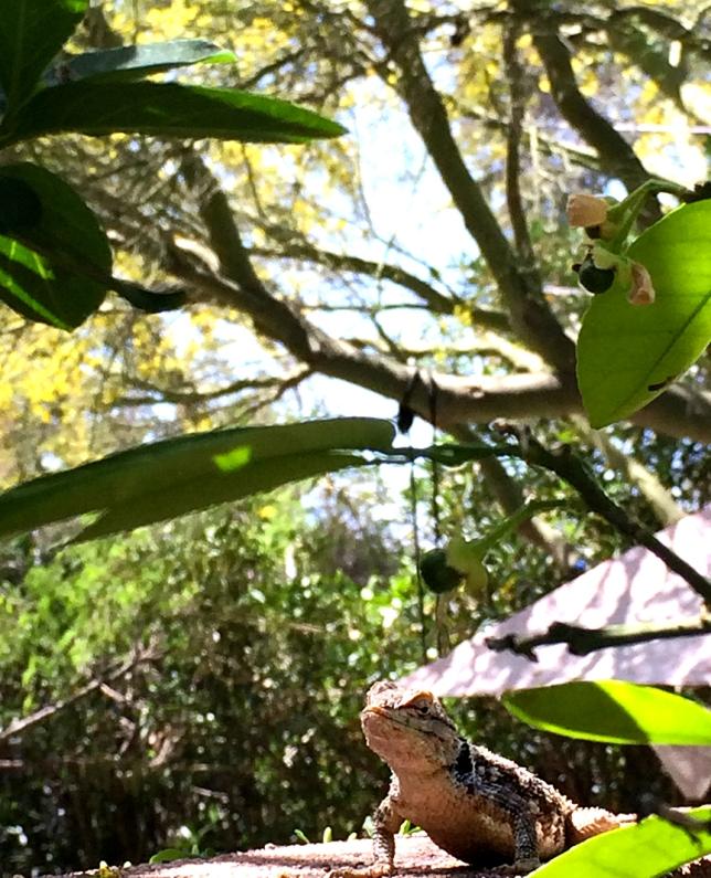Orangelina and palo verde
