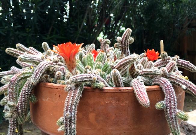 Cactus Moment