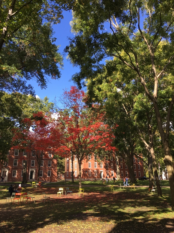 harvard yard fall 2015