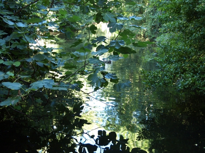 the river running under Moulin de Chapitre, Durfort, France. photo by kate mckinnon 2010